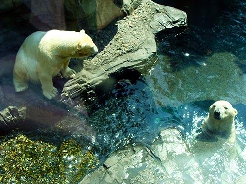 Zoológico De Central Park Cómo Llegar Horarios Precios