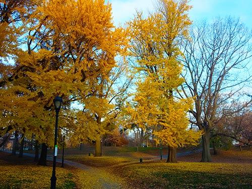 recorrer parques arboles en otoño. Foto de Andrea Hoare Madrid - Newyorkando