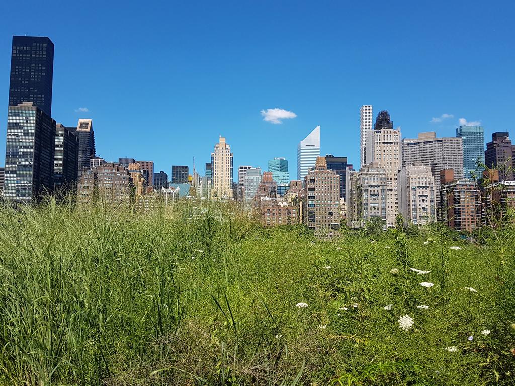 Midtown Manhattan visto desde una pradera de SouthPoint Park en Roosevelt Island - Foto de Andrea Hoare Madrid