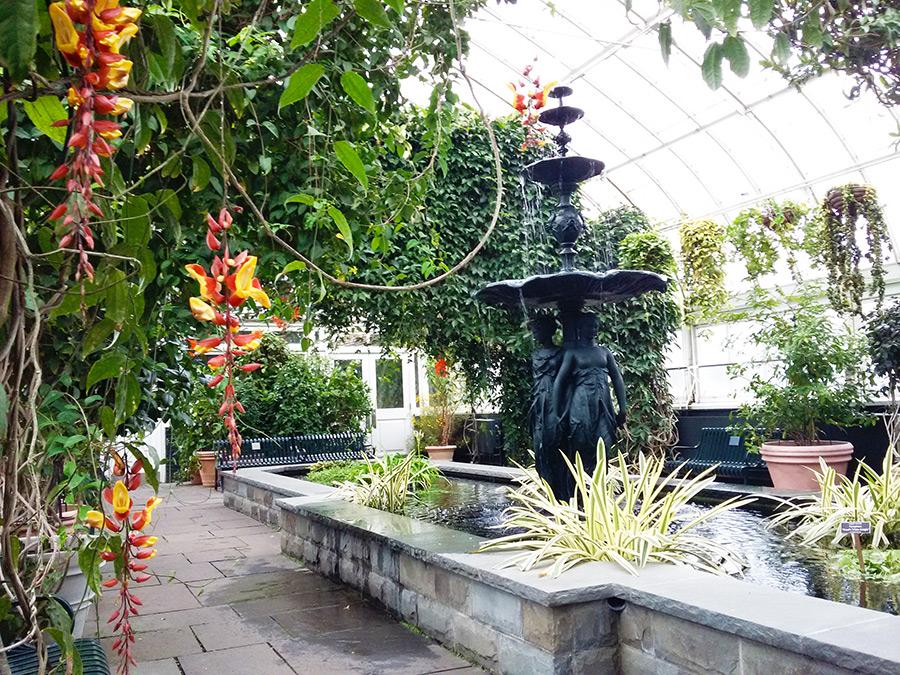 Detalle de orquídeas en uno de los invernaderos del Jardín botánico de Nueva York - Visita recomendada durante Nueva York en abril - Foto de Andrea Hoare Madrid