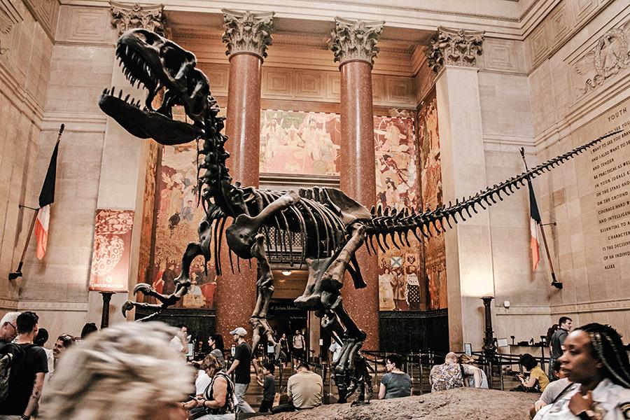 Museo De Historia Natural De Nueva York Precio Horario Ubicacion