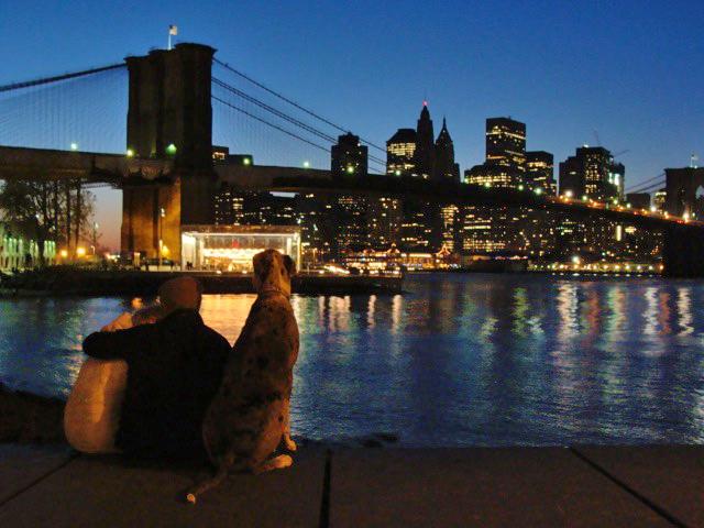 Pareja y perro gran danés mirando Manhattan desde el mirador del Brooklyn Bridge Park en el Pier 1 - Foto de Andrea Hoare Madrid