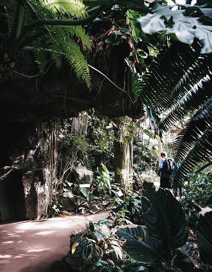 Interior del Pabellón Tropical del Brooklyn Botanic Garden de Yasir Eryilmaz en Unsplash disponible en https://unsplash.com/photos/wNhEp7BAD8A