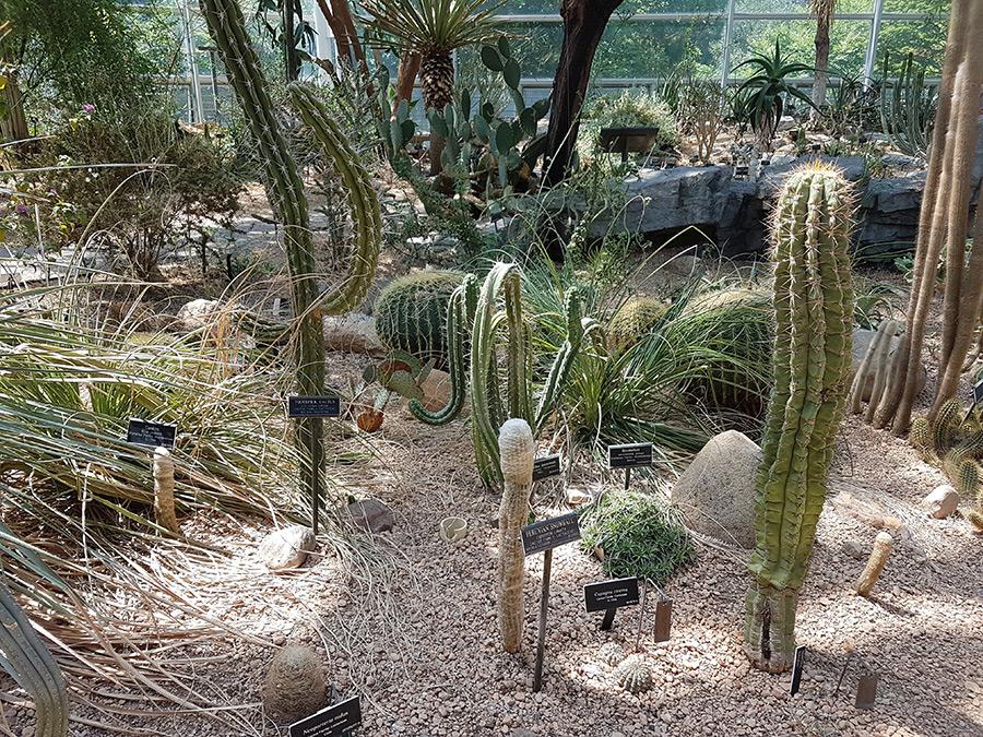Especies cactaceas de Argentina y Chile en el interior del Pabellón del Desierto del Brooklyn Botanical Garden - Foto de Andrea Hoare Madrid
