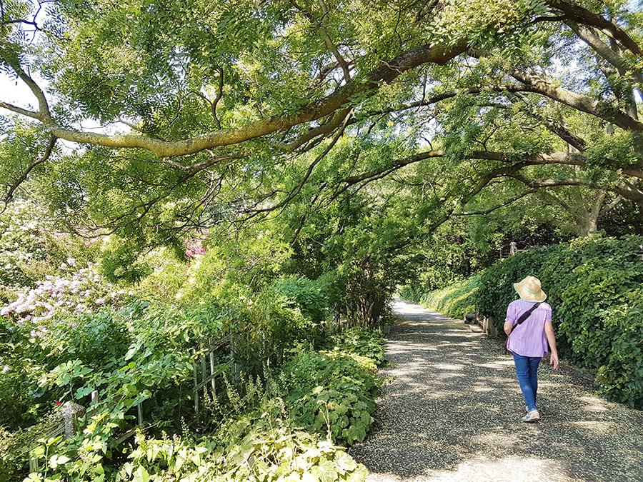 Senderos al interior del Jardín Botánico de Brooklyn (Ginko biloba alley) - Foto de Andrea Hoare Madrid