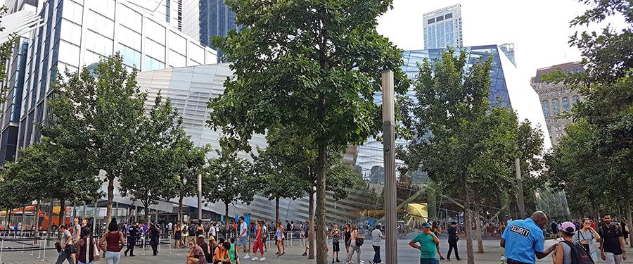 Panorámica de los árboles del Memorial del 9/11, retoños de los árboles que estuvieron antes de la Tragedia de las Torres Gemelas - Foto de Andrea Hoare Madrid