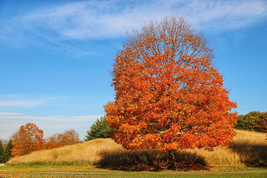 Árbol con las hojas color naranja durante el otoño en Storm King Art Center, un paseo espectacular durante octubre en Nueva York - Foto de PHOUNIUS en Unsplash disponible en https://unsplash.com/photos/UVD_YDfBOfo