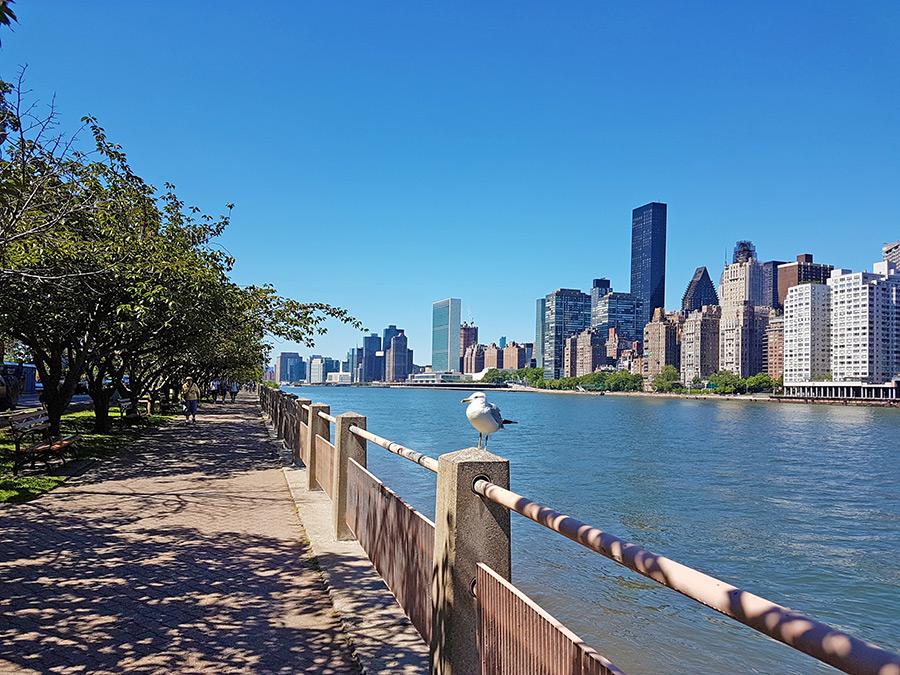 Paseo peatonal junto al East River en Roosevelt Island. Hacia el sur se distingue el edificio de la se de la Organización de las Naciones Unidas - Foto de Andrea Hoare Madrid