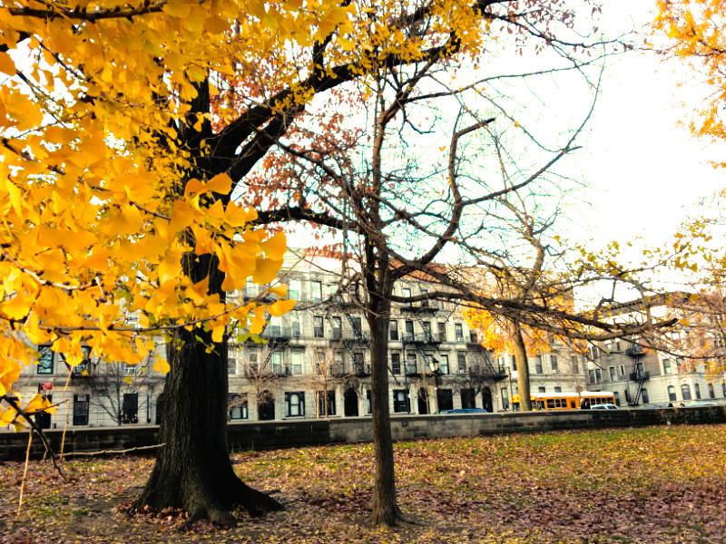 Casas de Park Slope vistas desde Prospect Park, árboles con las hojas amarillas de otoño - Foto de Andrea Hoare Madrid