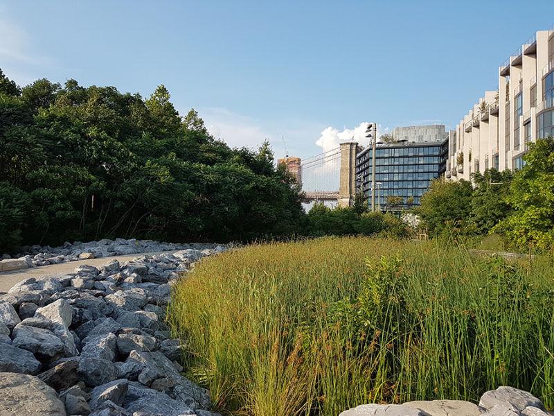 Caminos con vegetación y junto a modernos edificios en el Brooklyn Bridge Park - Foto de Andrea Hoare Madrid