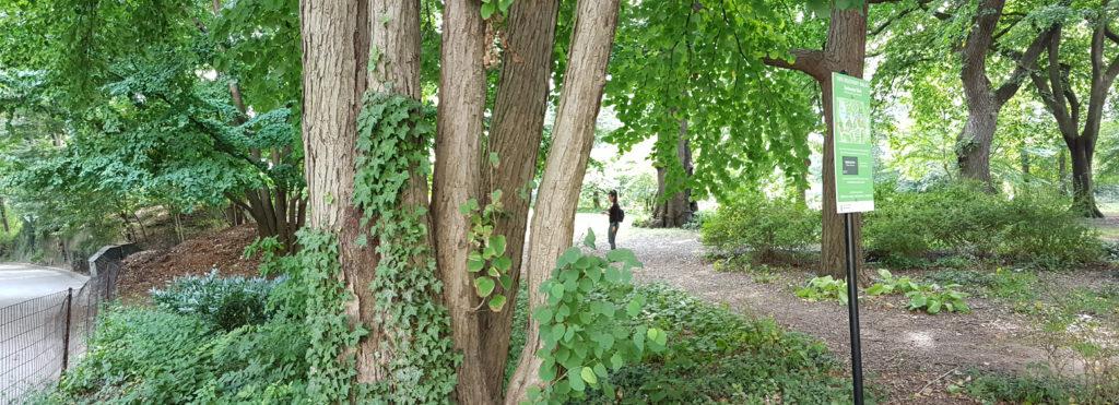 Árboles y senderos de los Strawberry en Central Park - Foto de Andrea Hoare Madrid