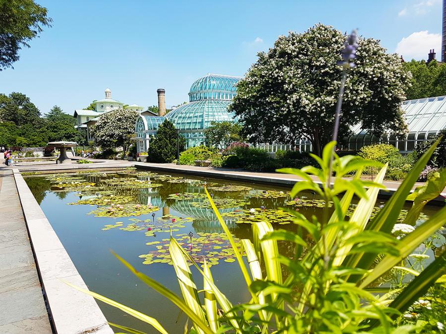 Pileta de los lirios e invernadero del Jardín Botánico de Brooklyn - Foto de Andrea Hoare Madrid