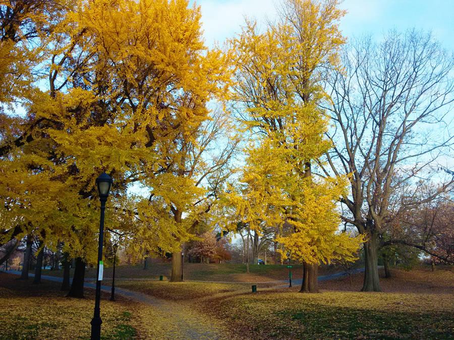 Árboles de Prospect Park de Brooklyn en otoño, hojas amarillas - Foto de Andrea Hoare Madrid